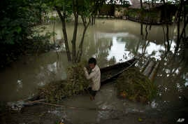 An Indian Mishing tribal man carries grass for his cattle on a boat surrounded by flood waters at Majuli, a river island east of Gauhati, northeastern Assam state, India on July 27, 2016. The members of this indigenous community live in huts raised o