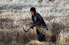 WFP: Three Million in Afghanistan Will Need Food Aid