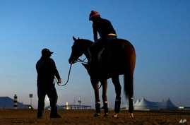 Assistant trainer Alan Sherman, left, stands Kentucky Derby winner California Chrome, with exercise rider Willie Delgado aboard, before an early morning workout at Pimlico Race Course, Maryland, May 17, 2014.
