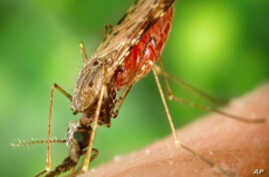 A new study from the Amazon links deforestation with an increase in malaria.