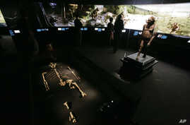 A new exhibit featuring the 3.2 million year old Australopithecus afarensis skeleton called Lucy and an artist's life-sized model, right, are displayed during a press preview at the Houston Museum of Natural Science in Houston Tuesday, Aug. 28, 2007.