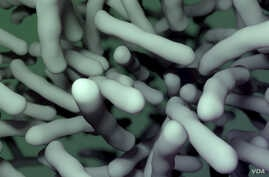 Multiple antibiotic-resistant strains of Clostridium difficile have recently emerged, posing a worldwide health threat. Researchers have identified a nonantibiotic drug that could help combat C. difficile infection. (Credit: V. Altounian/Science Tran