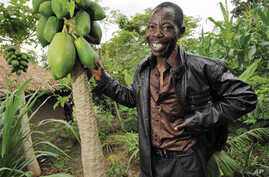 Smallholder agroforestry in Kenya is an example of sustainable intensification, according to Achieving Food Security in the Face of Climate Change report.