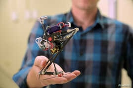 Researchers at the University of California, Berkeley, dubbed this robot Salto for its vertical jumping agility.  Shown in a Nov. 17, 2016, photo, Salto features a motorized, spring-loaded leg mechanism that lets the robot to crouch and leap.