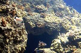 Deep-Sea Ecosystems at Risk According to Global Marine Census