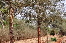 Zambian Farmers Encouraged to Grow Nutrient-Rich Trees