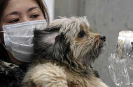 Japanese Disasters Also Leaving Animals in Peril
