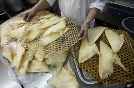 In this photo taken Thursday, Aug. 12, 2010, Joe Chan, chief chef of Sun Tung Lok Chinese Cuisine, prepares shark fin to be cooked at the kitchen of the restaurant in Hong Kong.