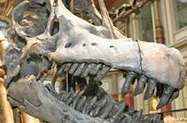 Fossil Studies Show Dinosaurs Were Warm-Blooded
