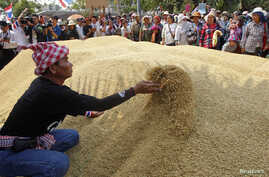 Farmers rearrange a pile of rice after dumping them on the ground outside a Bank for Agriculture and Agricultural Cooperatives in Bangkok, Thailand,, during a rally demanding the Yingluck administration resolve delays in payment from the rice pledgin