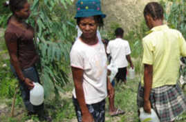 Haitian villagers water trees on a volunteer work day