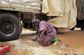 A man gathers rice spilled from a humanitarian food convoy that arrived from the Malian capital Bamako in the northeastern city of Gao, June 12, 2012.