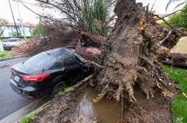 A car is left crushed by a fallen tree outside a residence in the Sherman Oaks section of Los Angeles, Feb. 18, 2017. A huge Pacific storm unloaded on Southern California, ravaging roads and opening sinkholes.