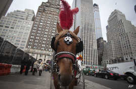 A horse pulls a carriage on 59th St in the Manhattan borough of New York, Dec. 1, 2014.
