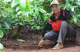Coffee farmer Ma Chuong shows off Drip Irrigation System (Photo: VOA / Daniel Schearf)