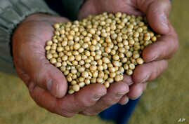 Food And Farm Low Fat Soybean