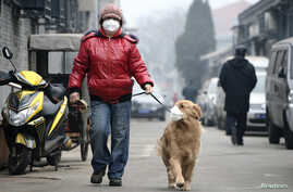 "A man and his dog, both wearing masks, walk along a small alley on a hazy day in Beijing, February 23, 2014. China's capital Beijing, under fire to take effective measures against air pollution, raised its four-tiered alert system to ""orange"" for the"