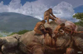 An artistic rendering of homo erectus killing an elephant on the African savannah about 1.2 million years ago. (Smithsonian/Karen Carr Studios).