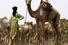 Tuareg Leaders in Niger and Mali Urge Tuareg in Libya to Work With NTC