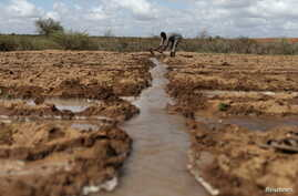 A farmer works in an irrigated field near the village of Botor, Somaliland, April 16, 2016.