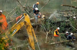 """A worker cuts a tree with a chainsaw next to a """"PV"""" marking, which stands for """"possible victim,""""  March 30, 2014, in the debris field of the massive landslide that struck the community of Oso, Washington."""