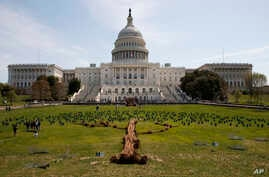 A tree art installation made up of individual trees and Hydrangeas is seen in front of the U.S. Capitol building on Capitol Hill in Washington, April 22, 2018, to celebrate Earth Day and promote the planting of trees in an effort to combat climate ch