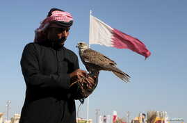 FILE - A Qatari man prepares his falcon to participate in a contest during Qatar International Falcons and Hunting Festival at Sealine desert, Qatar, Jan. 29, 2016. The kidnapping of 26 Qataris in December 2015 in the Iraqi desert while hunting, incl