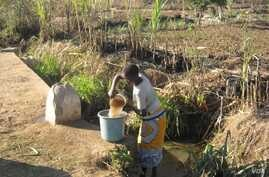 In Malawi, woman in the central district of Dedza gathers water (VOA/L. Masina)