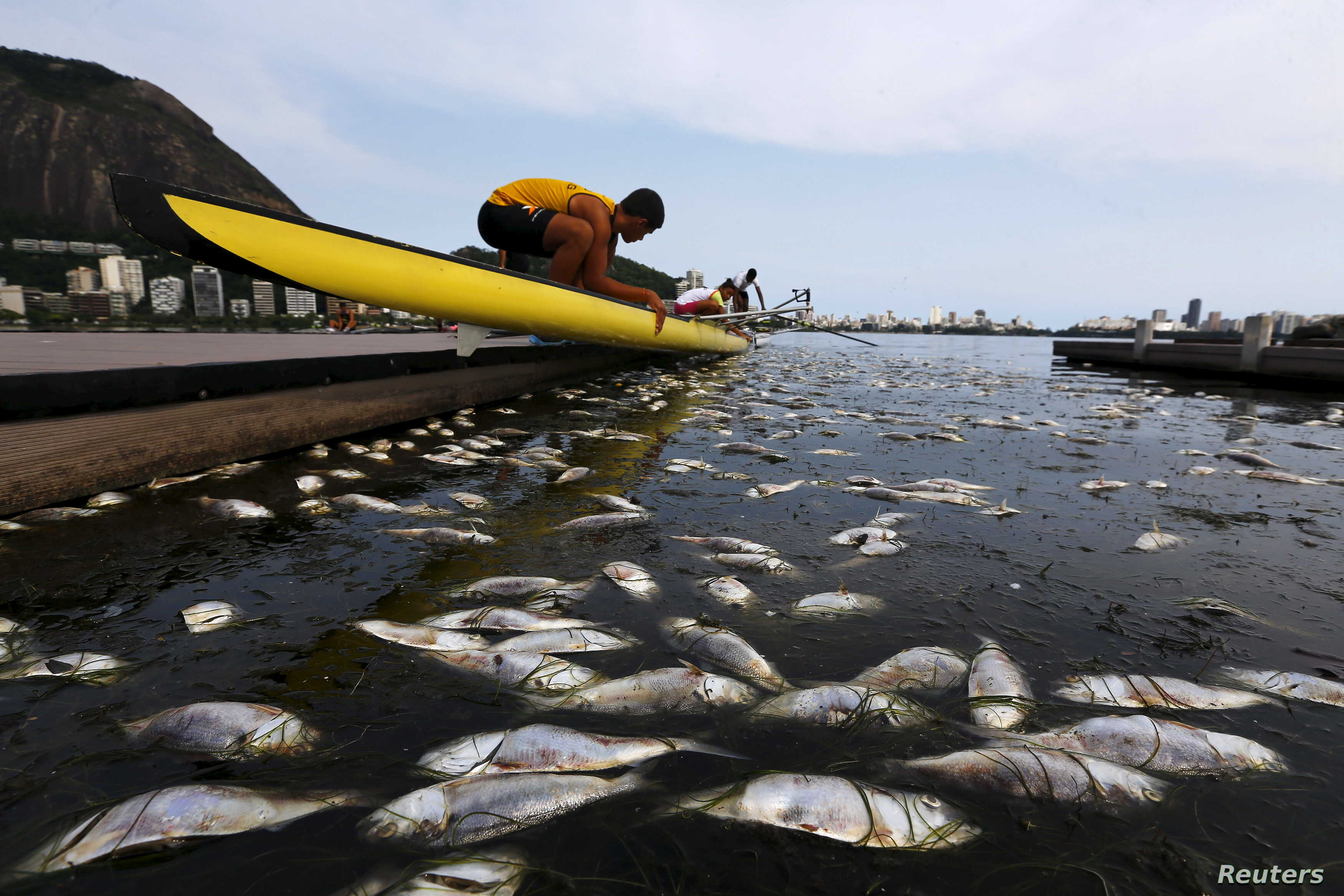 Dead fish are pictured next to a rowing athlete as he puts his boat on the water before a training session at the Rodrigo de Freitas lagoon, in Rio de Janeiro, Brazil, April 13, 2015.