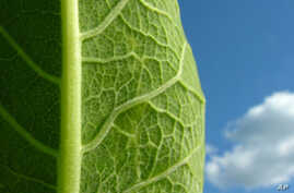 Artificial Leaf Turns Sunlight into Electric Power