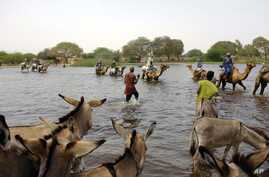 Herdsmen and others cross a tributary of Lake Chad to the village of  N'Gouboua, Chad, March 5, 2015, using the same route the Nigerian refugees used to flee Boko Haram.