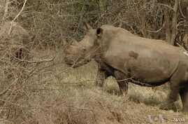 South Africa Game Park Protects Rhinos Against Poaching