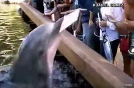 A dolphin is seen grabbing an iPad at a Florida SeaWorld.