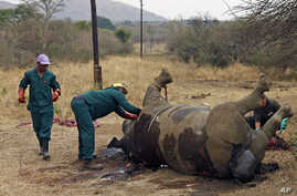 Workers perform a post-mortem on the carcass of a rhino after it was killed for its horn by poachers at the Kruger national park in Mpumalanga province, South Africa, September 14, 2011.