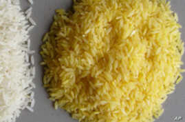 Its makers argue that vitamin A-enriched rice could prevent blindness in children.