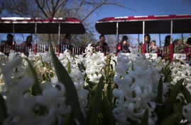 Visitors ride a monorail past blooming hyacinths at the Cincinnati Zoo and Botanical Garden, in Cincinnati, April 1, 2016. The zoo has temporarily closed its gorilla exhibit after having to shoot and kill a 17-year-old gorilla that grabbed and a 4-ye