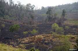 FILE - A view of a burned area in the Maya Biosphere Reserve, in San Andres municipality, Peten department, 500 kilometers north of Guatemala City, June 5, 2016. Officials and environmentalists in Guatemala said drug trafficking was behind dozens of