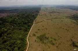 This Sept. 15, 2009 file photo shows a deforested area near Novo Progresso in Brazil's northern state of Para.Deforestation in the tropics is increasing by 2,000 square kilometers a year with half that loss in Brazil and Indonesia.