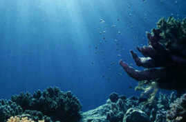 Not all marine animal and plant life will survive rising ocean acidity, and coral reefs are particularly vulnerable.