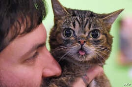Internet celebrity cat Lil Bub known for her unique appearance is held by owner Mike Bridavsky at the inaugural CatConLa event in Los Angeles, California on June 7, 2015.  The two day cat expo for cat people claims to be the first of its kind in Nort