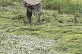 Analysts: Regional Cooperation Needed to Manage Asia Food Supply Shocks