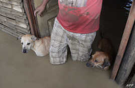 A local resident and his dogs stand in the doorway of their flooded home in Piura, northern Peru on March 28, 2017.