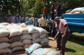 Flood survivors offload bags of maize, ready for distribution. (L. Mesina for VOA)