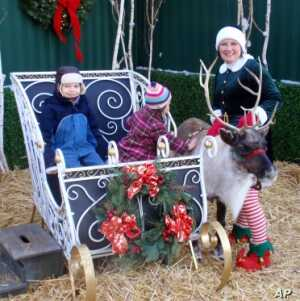 Live Reindeer, Camels Bring Holiday Cheer