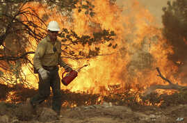 This Aug. 30, 2013, image provided by the U.S. Forest Service shows a member of the BLM Silver State Hotshot crew using a drip torch to set back fires on the southern flank of the Rim Fire in California.