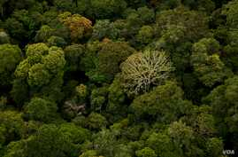 Gabon, which is covered nearly entirely by rainforest, is one of few places on Earth where a primary tropical rainforest extends all the way to the beach. (Credit: ©Wild-Touch, Sarah Del Ben, 2012)