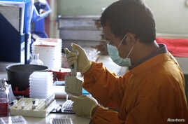 A staff member works on a blood sample of a chicken at the Veterinary Research Bureau, (File photo).