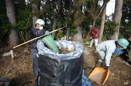 FILE - Workers clean radioactive soils and plants at a private house's garden in Minamisoma, Fukushima prefecture, northeastern Japan, Feb. 24, 2016.