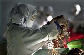 FILE - A female worker scatters raisins to select at Hajii Sher Mohamad Raisin Factory, near Kandahar, Afghanistan.