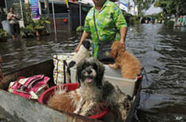 Thailand Fights To Channel Bangkok Flood Waters